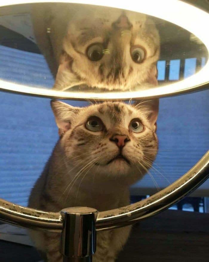 29 animais de estimação que descobriram espelhos 22