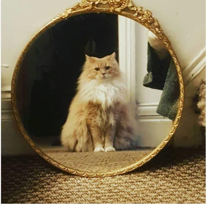 29 animais de estimação que descobriram espelhos 21