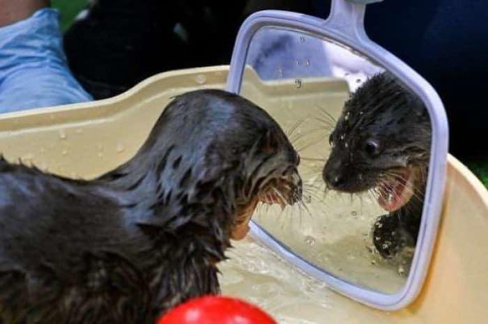 29 animais de estimação que descobriram espelhos 17