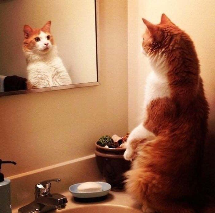 29 animais de estimação que descobriram espelhos 15