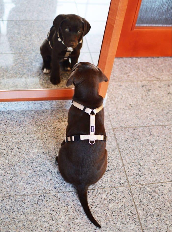 29 animais de estimação que descobriram espelhos 14