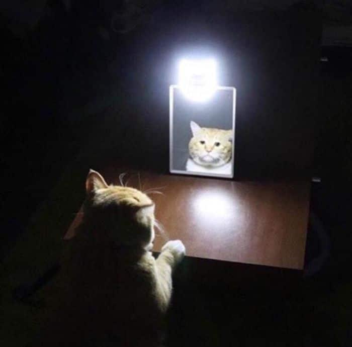 29 animais de estimação que descobriram espelhos 11