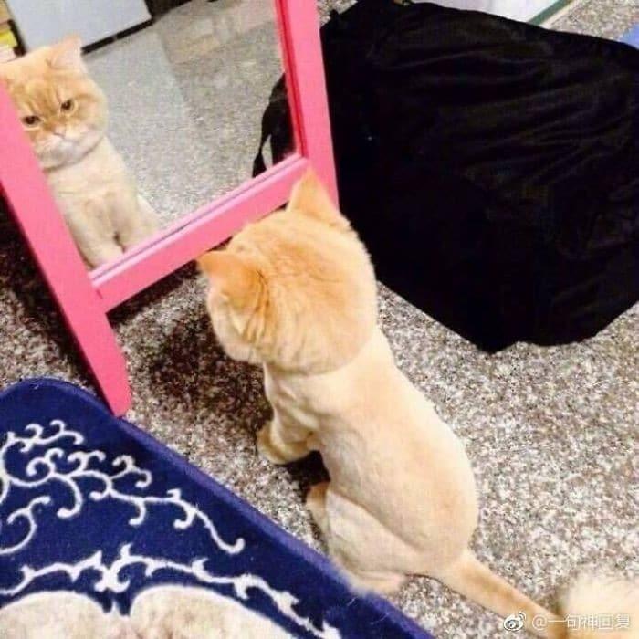 29 animais de estimação que descobriram espelhos 9