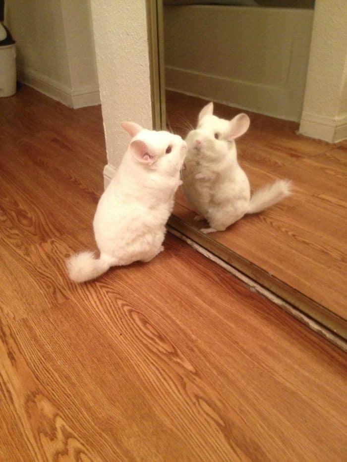 29 animais de estimação que descobriram espelhos 8