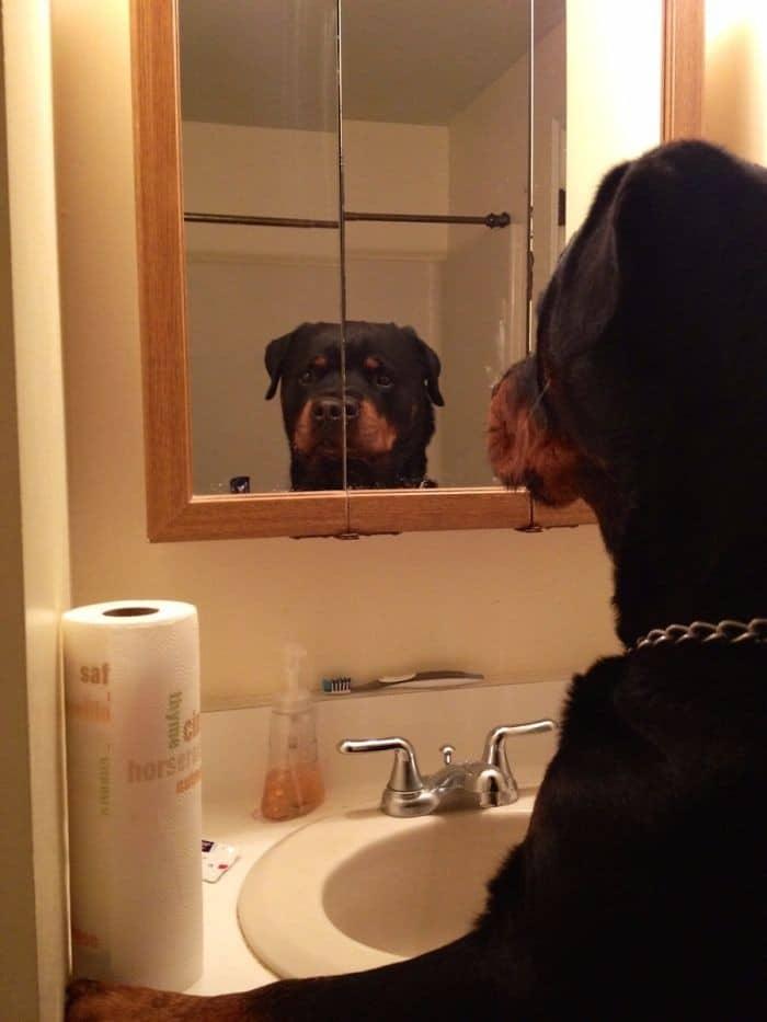 29 animais de estimação que descobriram espelhos 7