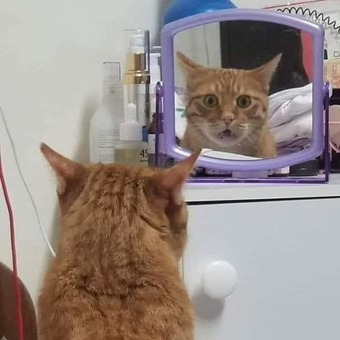 29 animais de estimação que descobriram espelhos 6