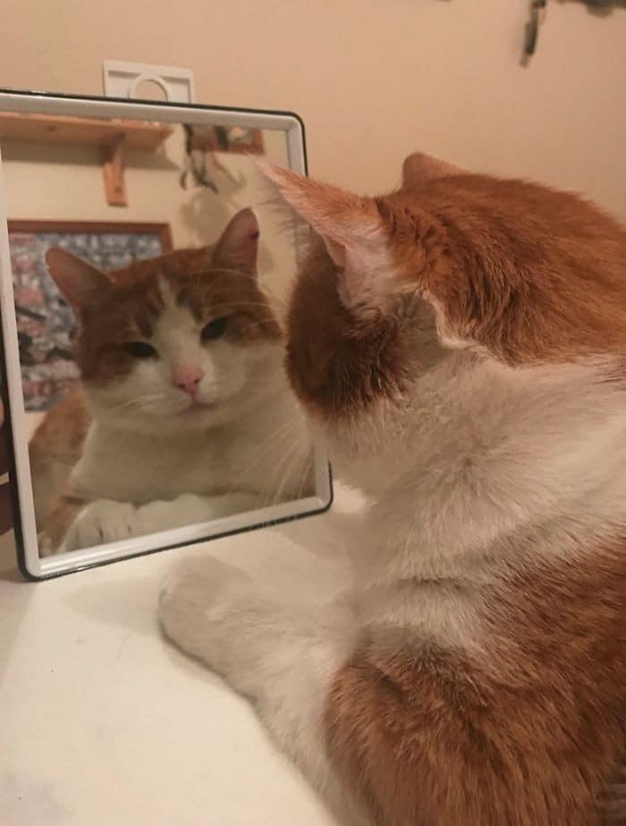 29 animais de estimação que descobriram espelhos 5