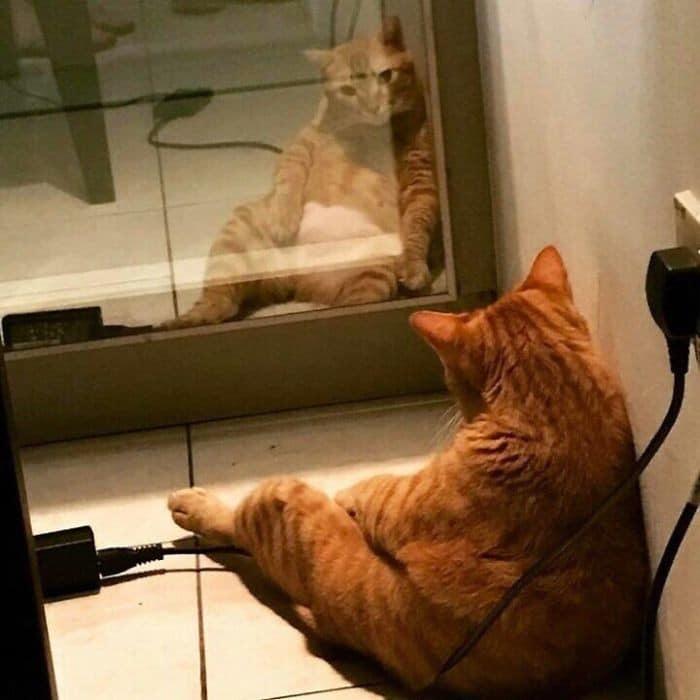 29 animais de estimação que descobriram espelhos 4
