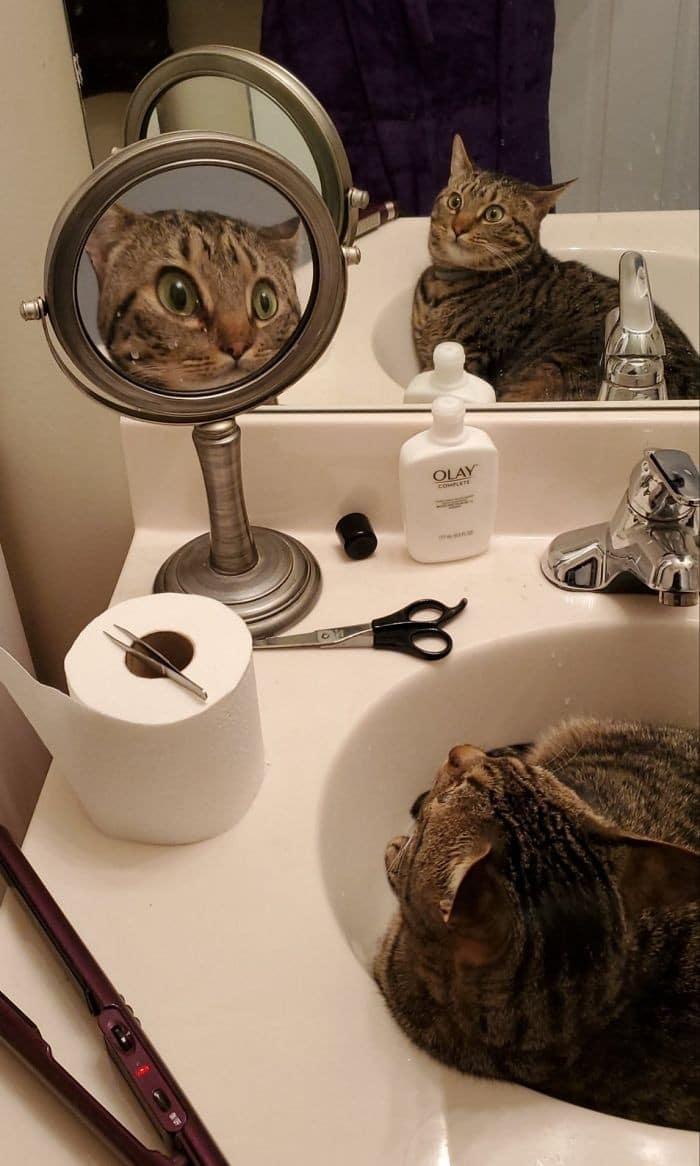 29 animais de estimação que descobriram espelhos 3