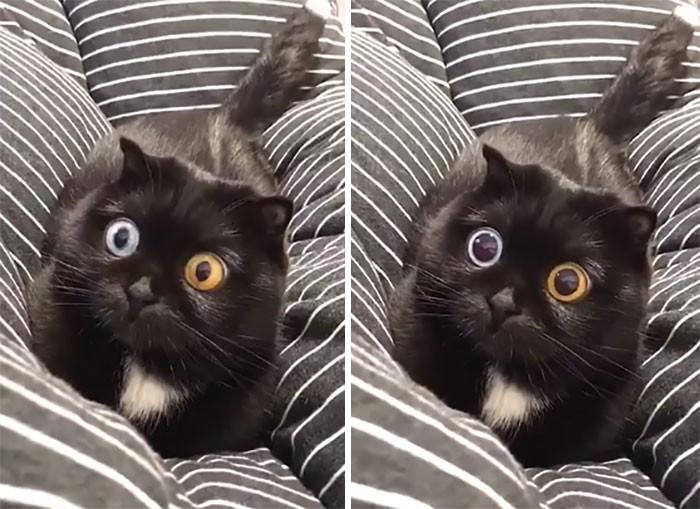 45 das postagens mais engraçadas sobre gatos que são impossíveis de não rir 5