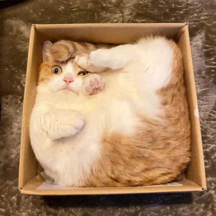 45 das postagens mais engraçadas sobre gatos que são impossíveis de não rir 16
