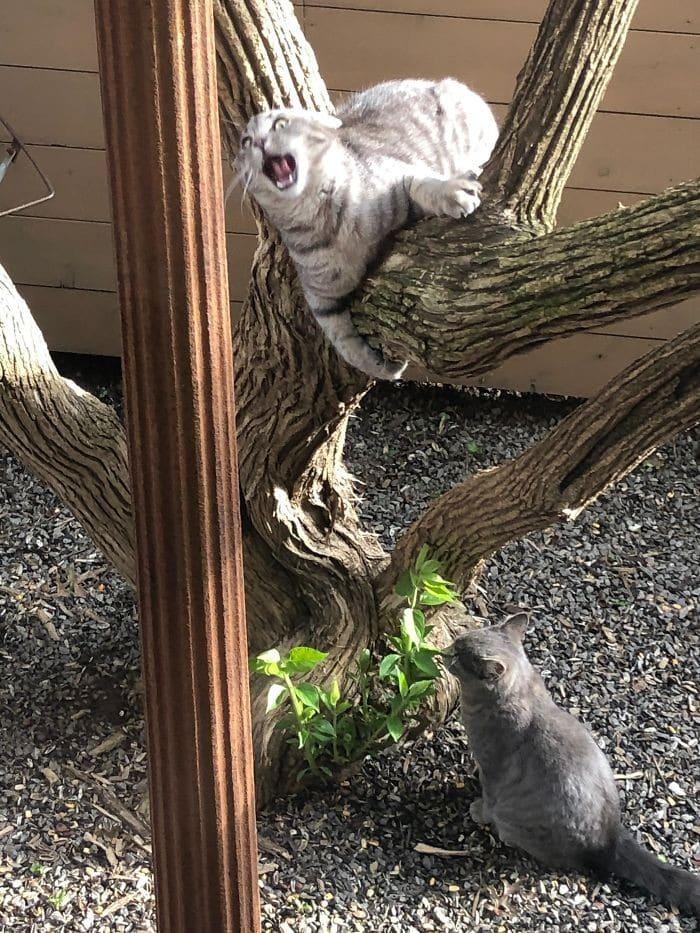45 das postagens mais engraçadas sobre gatos que são impossíveis de não rir 17