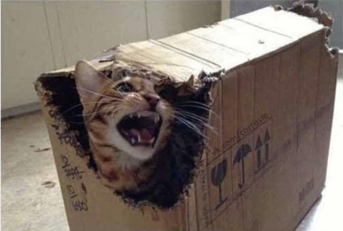 45 das postagens mais engraçadas sobre gatos que são impossíveis de não rir 20