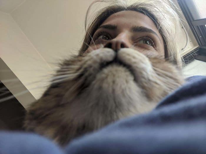 45 das postagens mais engraçadas sobre gatos que são impossíveis de não rir 25