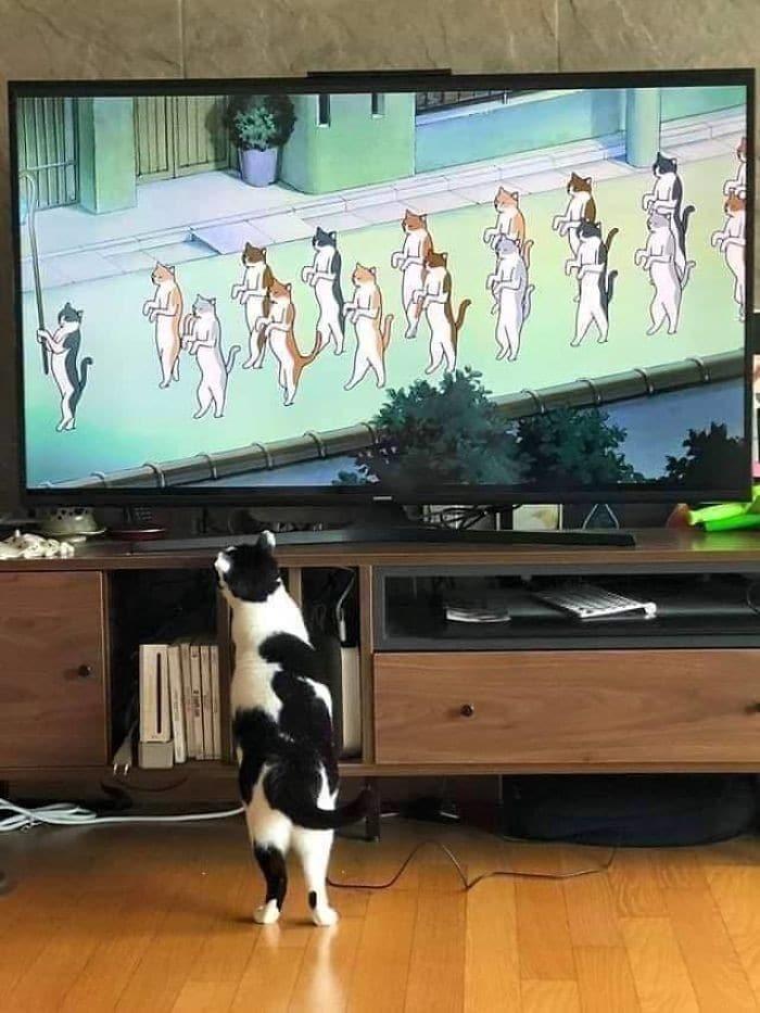 45 das postagens mais engraçadas sobre gatos que são impossíveis de não rir 27