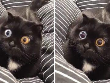 45 das postagens mais engraçadas sobre gatos que são impossíveis de não rir 1