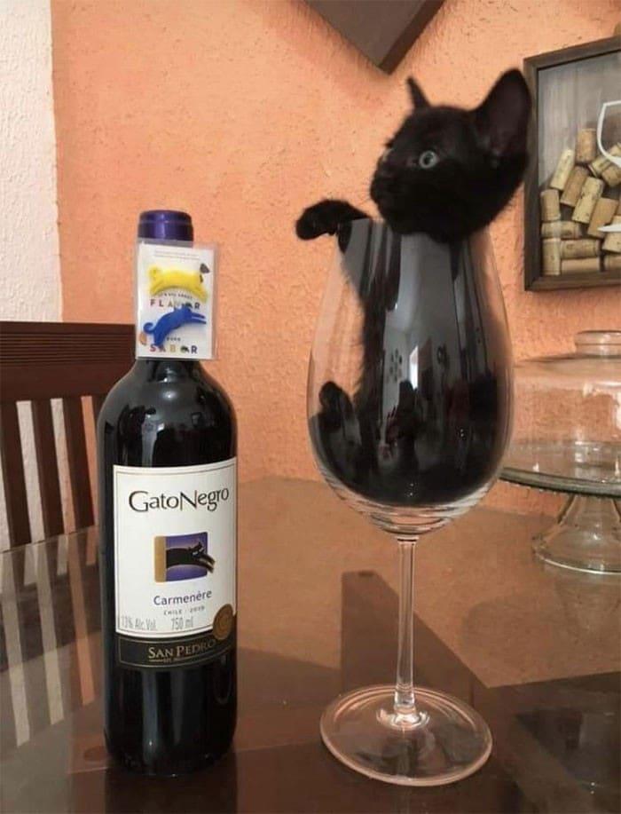 45 das postagens mais engraçadas sobre gatos que são impossíveis de não rir 38