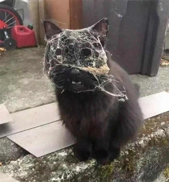 45 das postagens mais engraçadas sobre gatos que são impossíveis de não rir 42