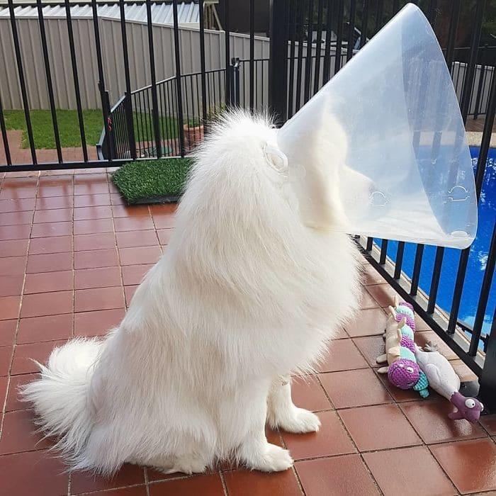 35 fotos engraçadas de animais de estimação usando cone 22