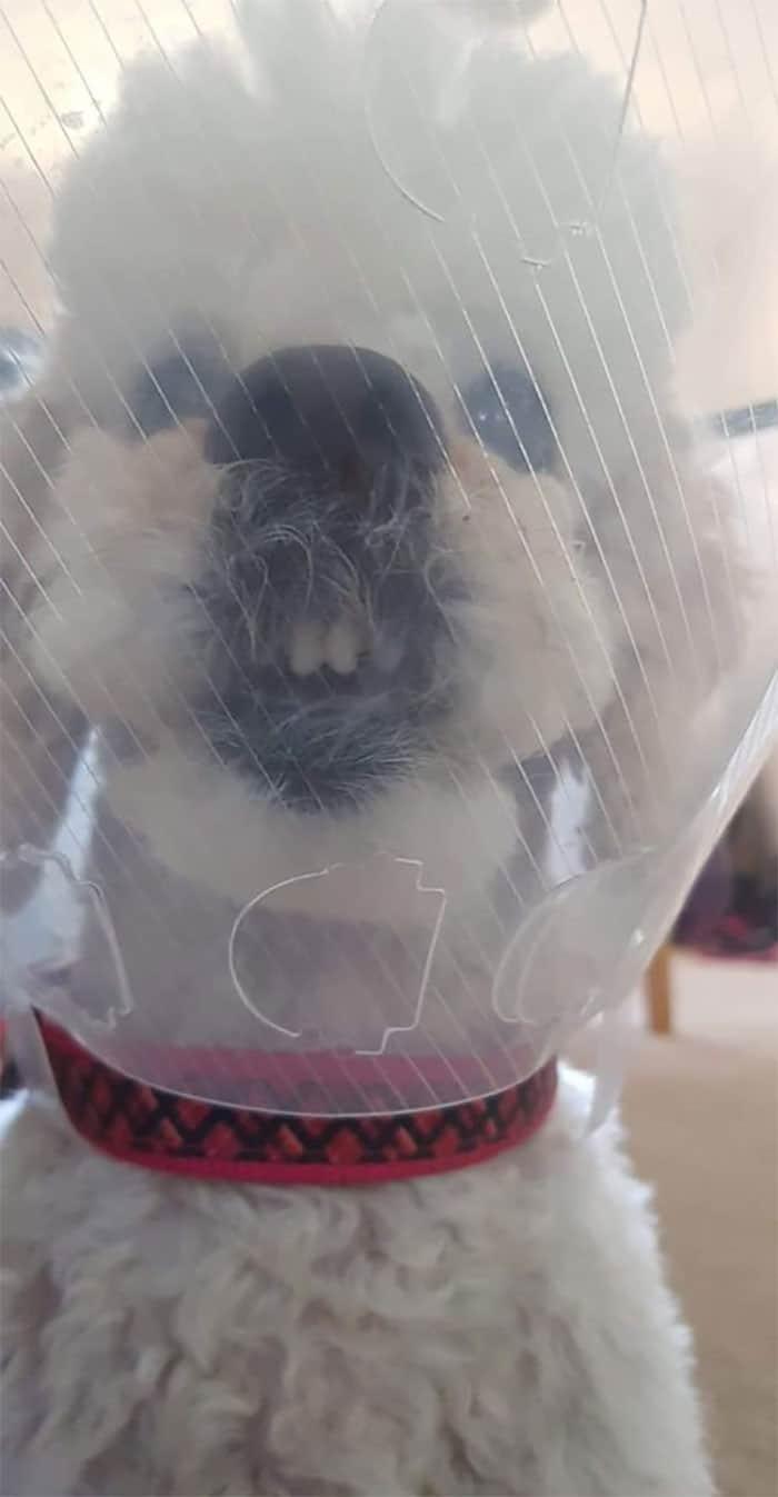 35 fotos engraçadas de animais de estimação usando cone 28