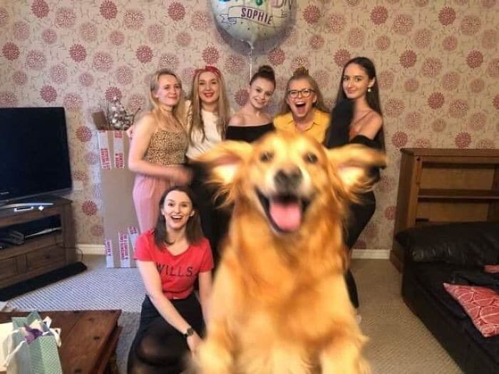 35 fotos hilárias de cachorro para colocar um sorriso em seu rosto 20