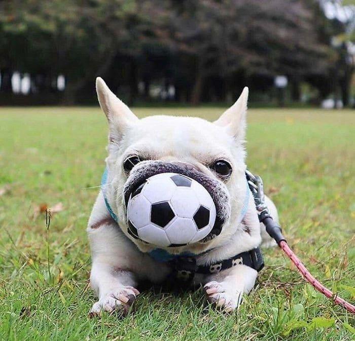 35 fotos hilárias de cachorro para colocar um sorriso em seu rosto 21