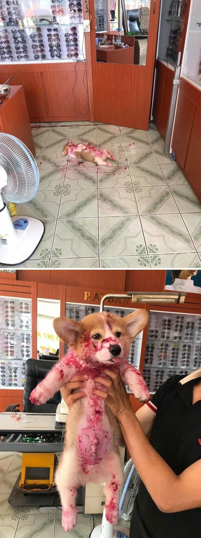 35 fotos hilárias de cachorro para colocar um sorriso em seu rosto 28