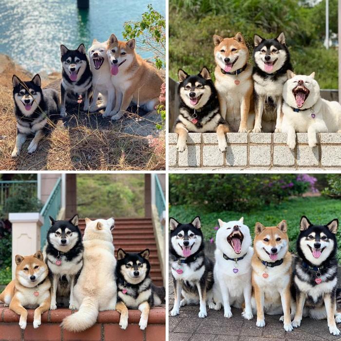 35 fotos hilárias de cachorro para colocar um sorriso em seu rosto 31