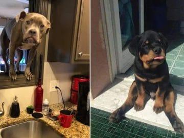 35 fotos hilárias de cachorro para colocar um sorriso em seu rosto 3