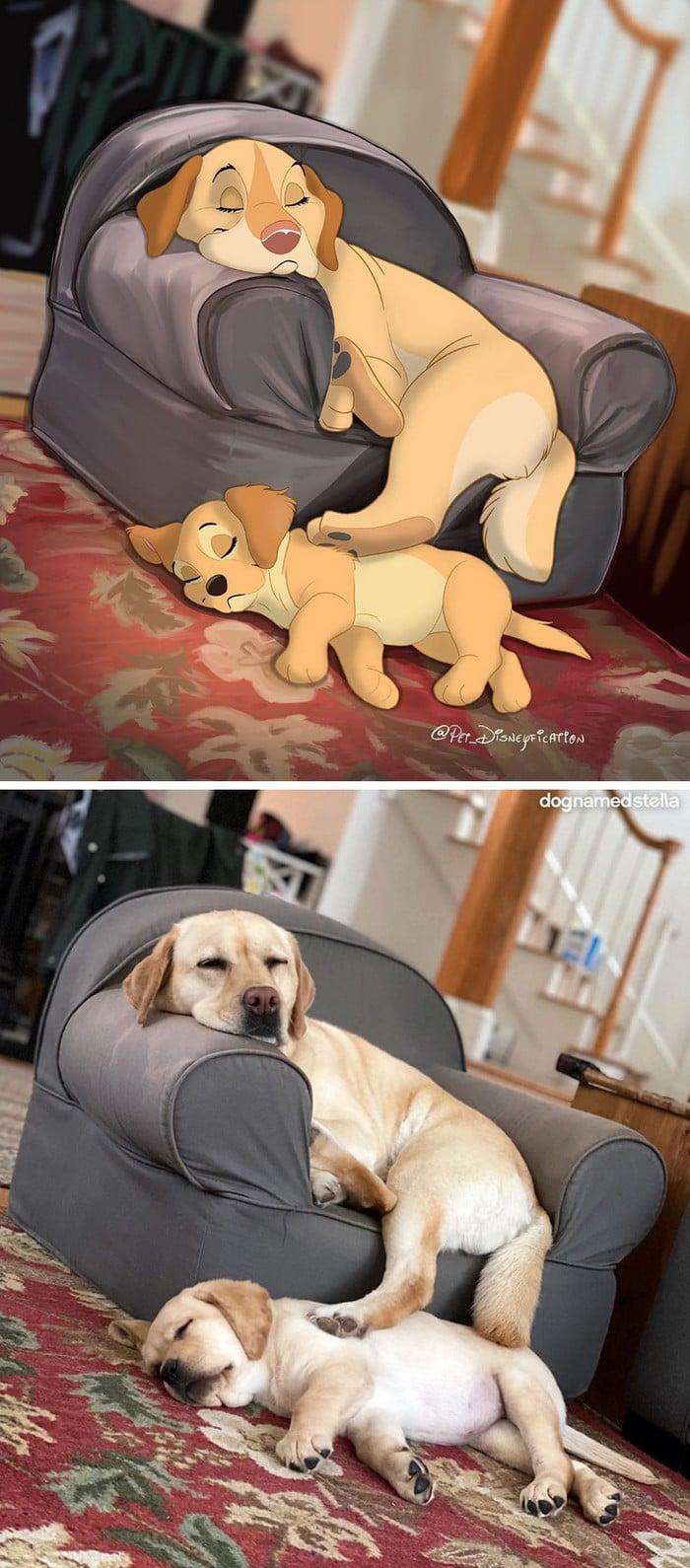 Ilustrador transforma fotos de animais de estimação em criações mágicas no estilo Disney (18 fotos) 15