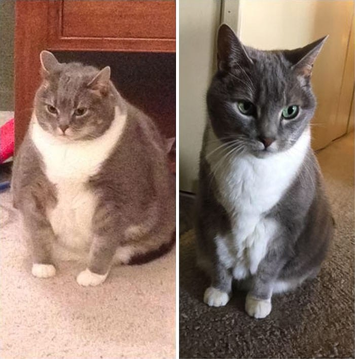 37 impressionantes transformações de perda de peso de gato 29
