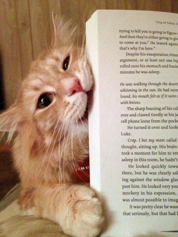 Quando os donos de gatos tentam ler (22 fotos) 2