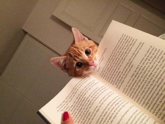 Quando os donos de gatos tentam ler (22 fotos) 3