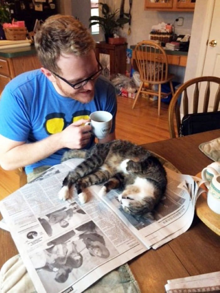 Quando os donos de gatos tentam ler (22 fotos) 7
