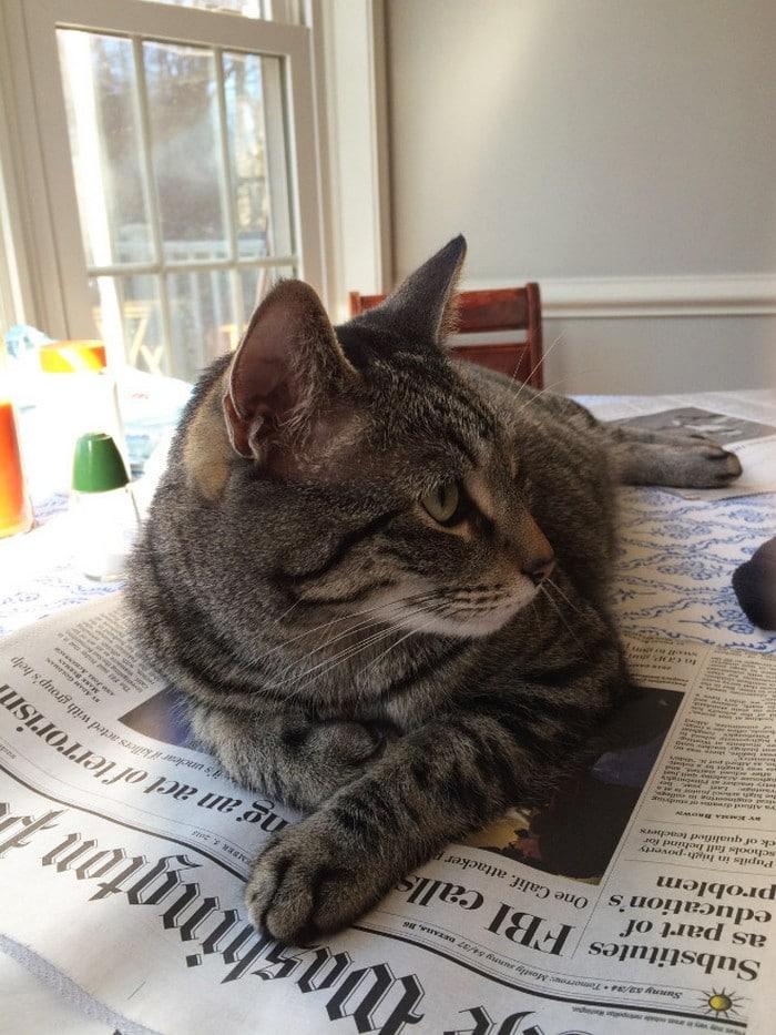 Quando os donos de gatos tentam ler (22 fotos) 10