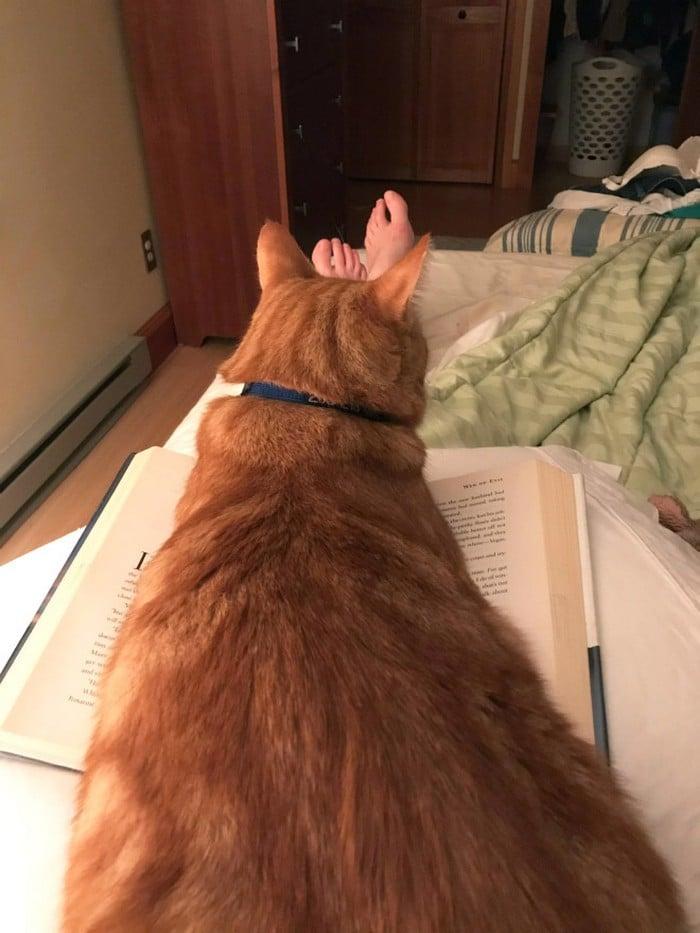 Quando os donos de gatos tentam ler (22 fotos) 15