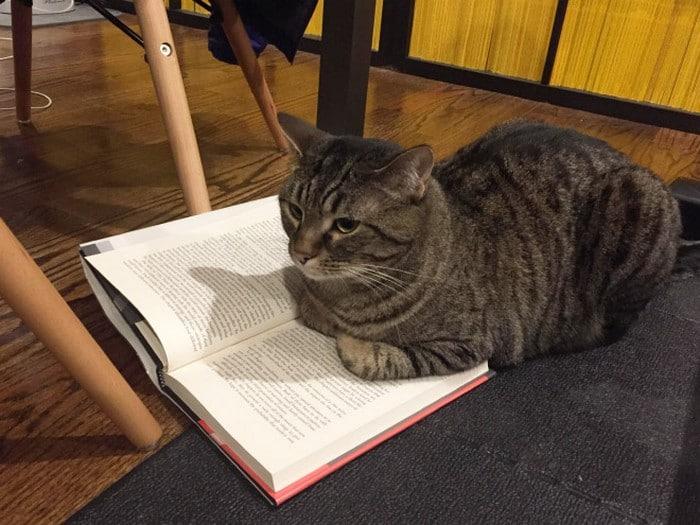 Quando os donos de gatos tentam ler (22 fotos) 19