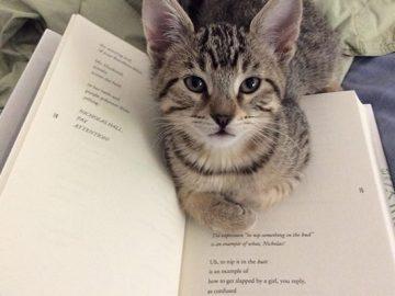 Quando os donos de gatos tentam ler (22 fotos) 4