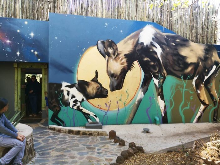 Artista sul-africano pinta grafites incríveis que interagem com o ambiente (32 fotos) 7