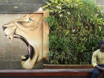 Artista sul-africano pinta grafites incríveis que interagem com o ambiente (32 fotos) 38