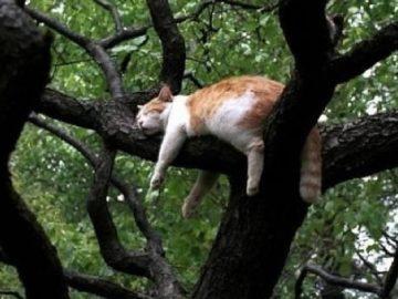 34 gatos que dominam a arte de dormir nas árvores 4