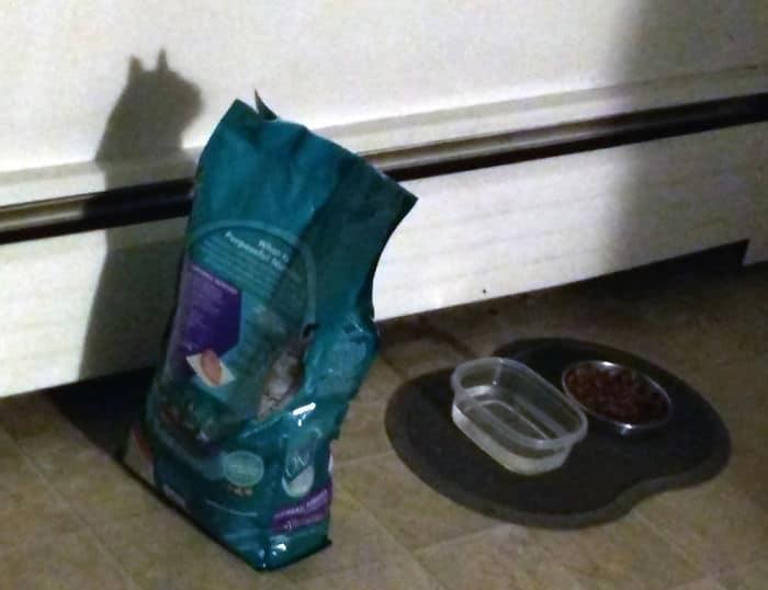 23 pessoas viram gatos em lugares inesperados e decidiram tirar fotos 12