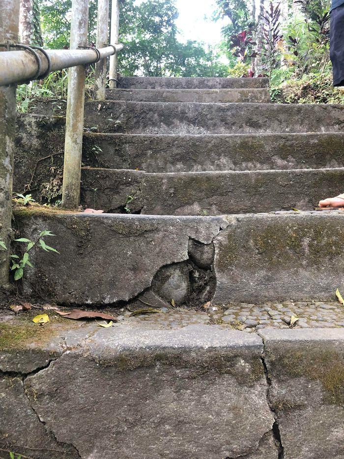 23 pessoas viram gatos em lugares inesperados e decidiram tirar fotos 14