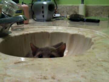 43 adoráveis gatinhos no meio de um ataque furtivo 24