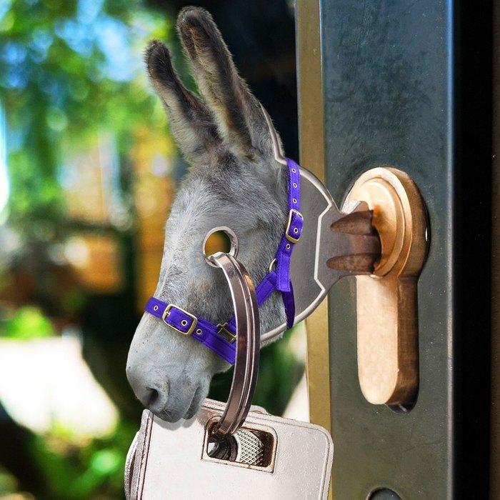 Alguém colocou animais em coisas aleatórias e a internet está adorando 2