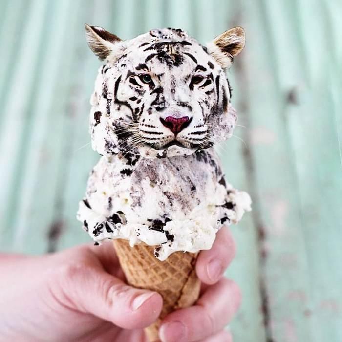 Alguém colocou animais em coisas aleatórias e a internet está adorando 32