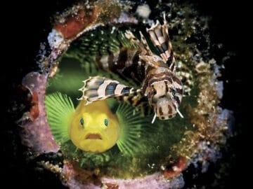 26 fotos vencedora do concurso de fotógrafo subaquático do ano de 2020 7