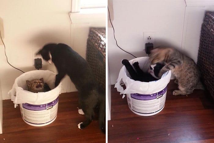 35 fotos de gatos hilariantes que você precisa ver 7