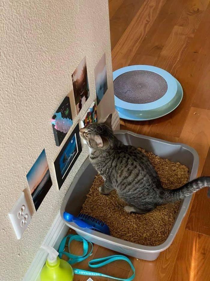 35 fotos de gatos hilariantes que você precisa ver 11