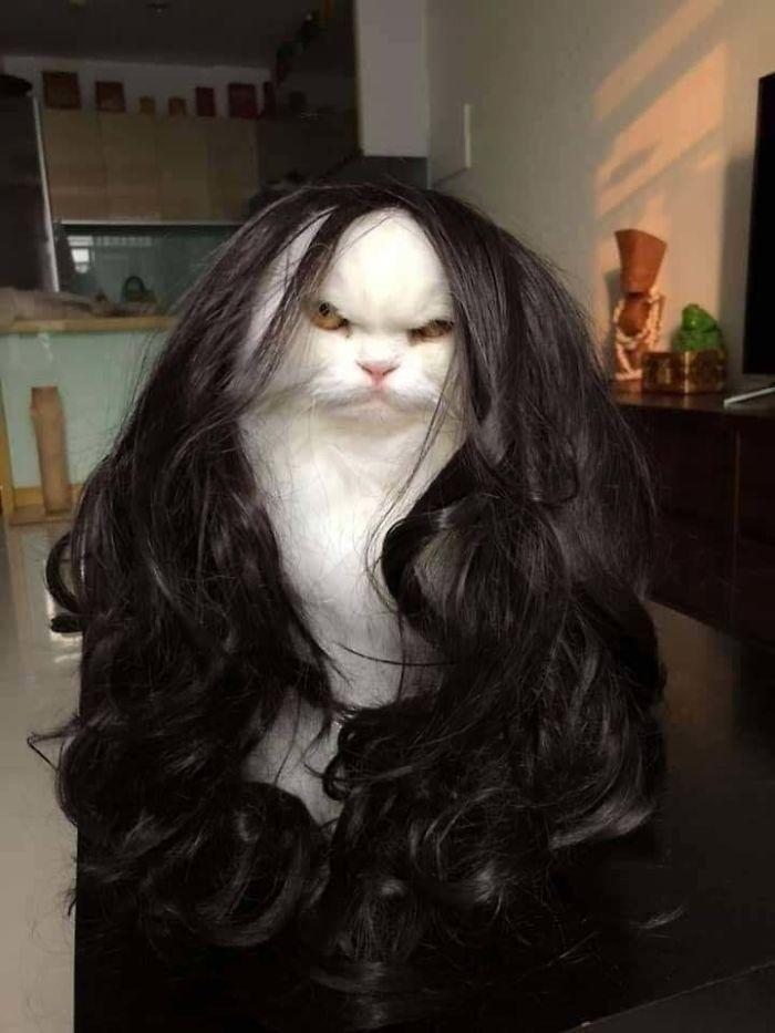 35 fotos de gatos hilariantes que você precisa ver 20